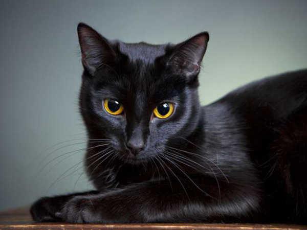 Mơ thấy mèo đen liệu có phải điềm báo xui xẻo, đánh con số nào?