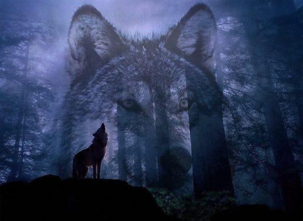 mơ thấy sói điềm gì