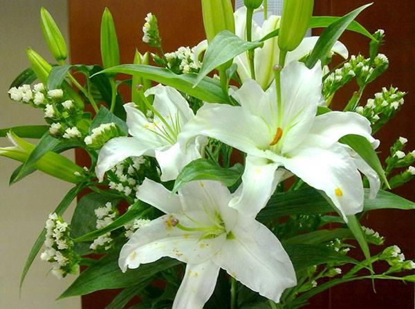 Giải mã giấc mơ thấy hoa huệ là điềm báo trước gì