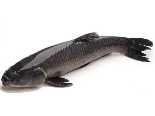 Phân tích ý nghĩa giấc mơ thấy cá trắm đánh lô đề con gì chính xác?