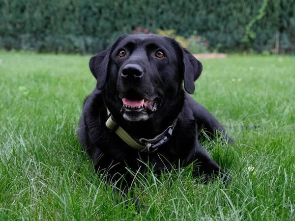 Nằm mơ thấy chó đen là điềm báo gì đánh số mấy