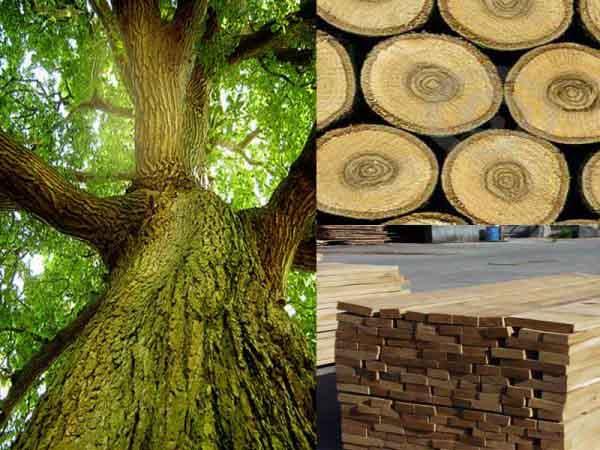Nằm mơ thấy gỗ có điềm báo gì, đánh con gì ăn chắc