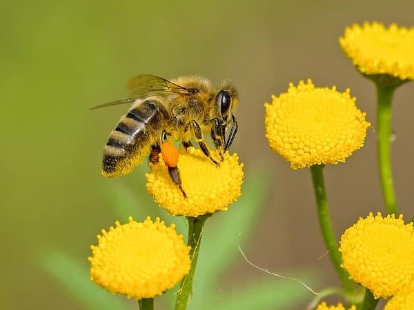 Mơ thấy ong đánh con gì?