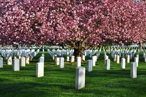 Nằm mơ thấy nghĩa địa
