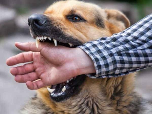 Mơ thấy bị chó cắn mang đến điềm báo gì?